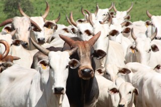 Pol�cia desarticula quadrilha suspeita de furto de gado na Para�ba